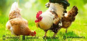 کود پلیت مرغی غنی شده