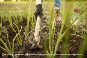 کود پلیت مرغی برای هر درخت