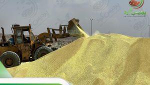 کود گوگرد میکرونیزه کشاورزی