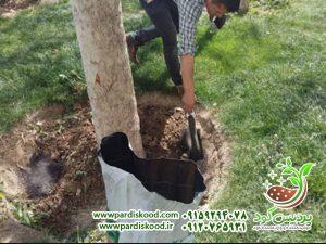 کود سولفات آمونیوم برای درخت سیب