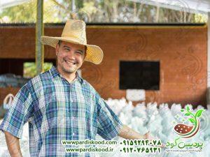 سولفات آمونیوم پودری
