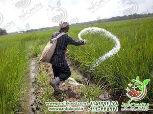 کود سولفات آمونیوم ازبکستان